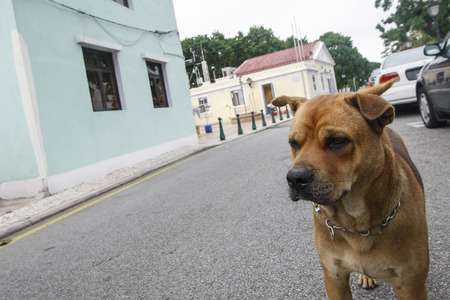 doggies: Dog around coloane village in Coloane Stock Photo