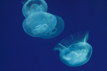 Jellyfish swimming at aquarium Imagens