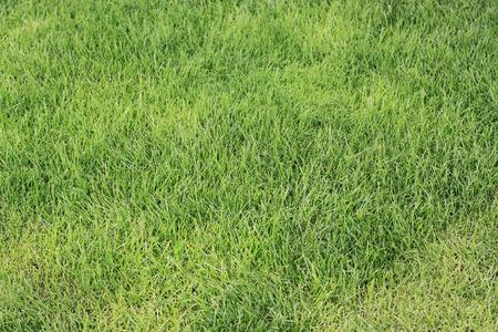 Heldergroen gras dat op het vierkant van Seoel wordt behandeld Stockfoto
