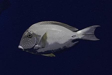 Oil painting of tropical fish swim in aquarium.