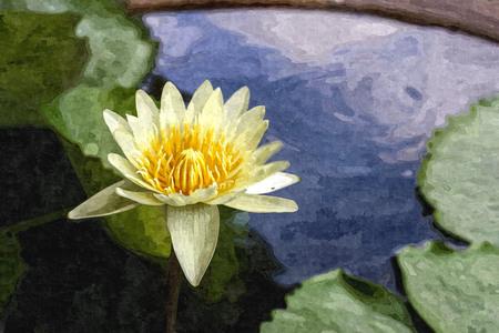 Oil paint of lotus flower full bloom at street ponds. Stock Photo