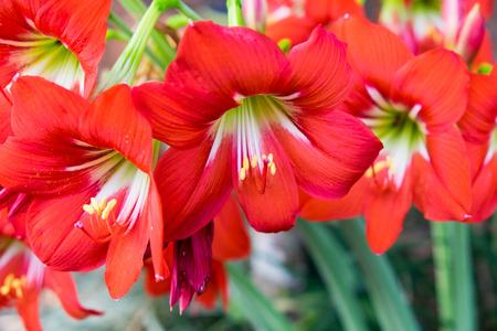 quad: Red Flower Quad Thailand