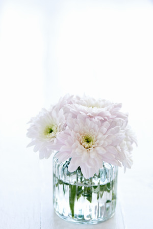 arrangment: Close up of a small arrangement of light pink chrysanthemums in a clear vase with copyspace Stock Photo