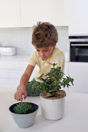 Cute caucasian boy looking and touching indoor potted plant on kitchen counter photo