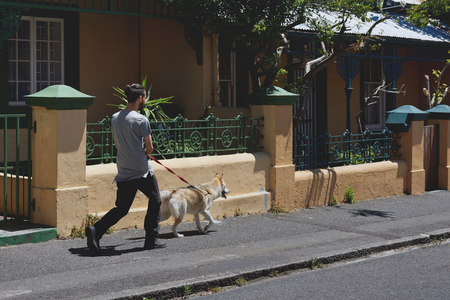 routine: Man walking his dog, part of daily routine exercise for pet husky