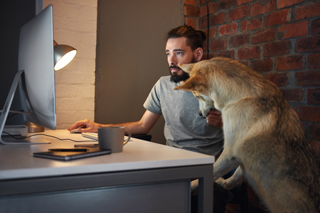 Curious husky dog pet  seeking owner's attention at his desk as he concentrates on working at his computer