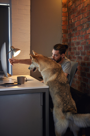 Curious husky dog pet at owner's desk looking at the computer screen Stock Photo