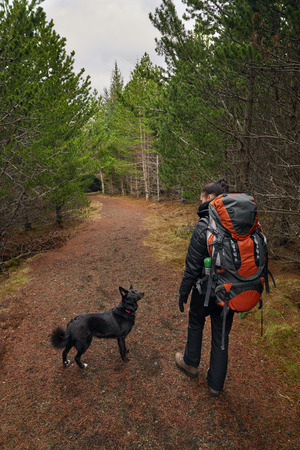 best friend: Happy active lifestyle woman walking hiking trekking in forest woods with best friend companion pet dog