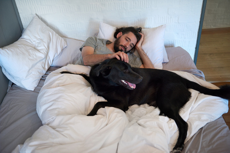 black dog: Dog lying in bed with owner, getting stroked and scratched, loving friendship companionship best friend Stock Photo