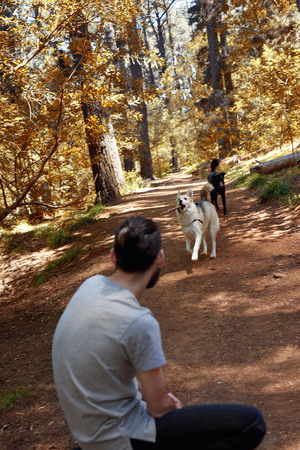 fetch: Man takes a break from walking his dogs in nature forest and stops to play fetch with them