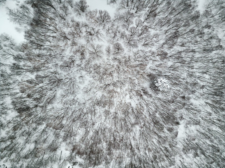 snowy landscape from overhead drone aerial photography, repeated pattern of bare trees and icy snow covered landscape