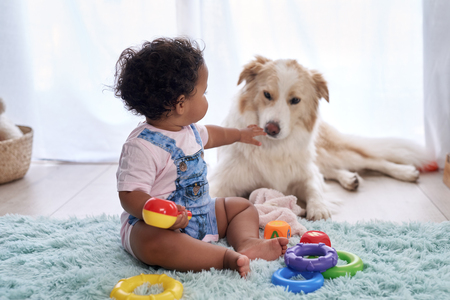 Baby girl sitting on floor playing with family pet dog, child friendly border collie 版權商用圖片 - 118728287