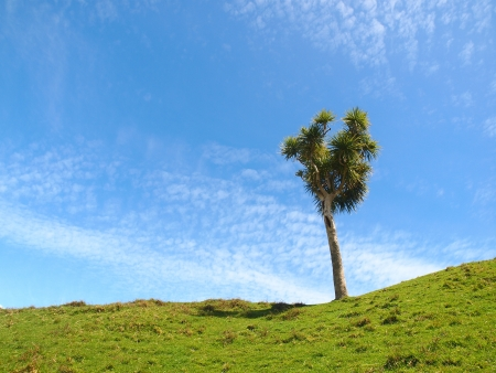 underbrush: grassland