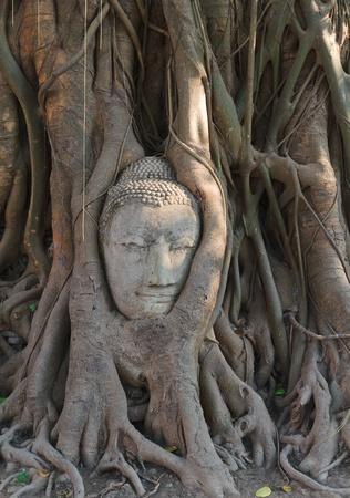 Buddha Stock Photo - 13170573