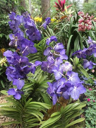 thai orchid: Thai Orchid
