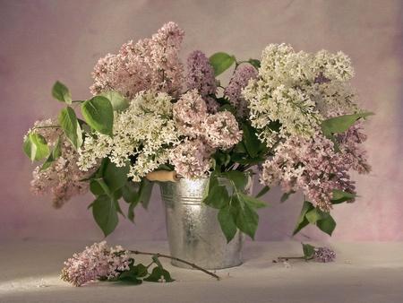 still life: Lilacs in a bucket