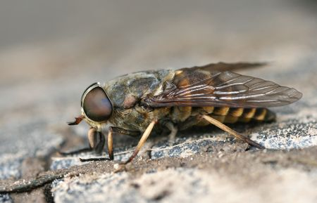 The importunate insect, preventing to carry out week-end