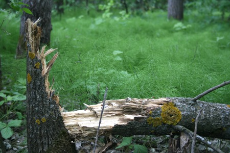sustained: The old tree has not sustained a strong wind and has fallen