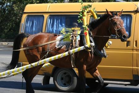 epoch: Cavallo e l'autobus. Un trasporto pubblico comunale - diversa epoca. Archivio Fotografico