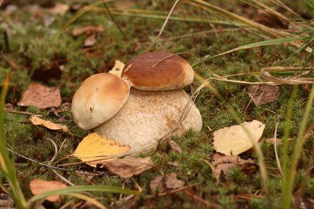 mutant: Unusual mushroom - a mutant on a wood glade