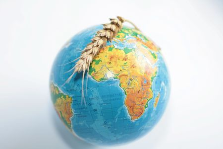 conceptually: Wheaten ripe ear above the globe