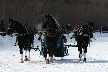 Winter walk on horses in a vehicle