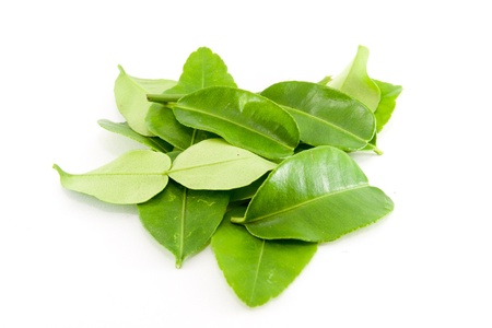 kaffir leaves on white background photo