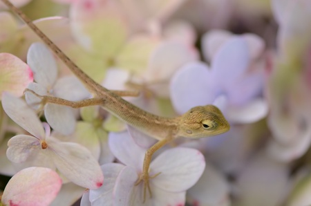 living things: Flower and animals