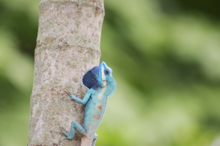 viviparous lizard: Lizard Island on the tree  Lacertilia, Sauria