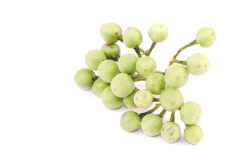 Vegetables and Thai herbs  Solanum trilobatum Linn