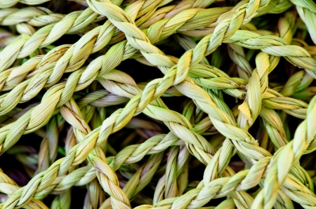 Rope made from Vetiver Grass Vetiveria zizanioides , Stock Photo