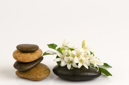 jessamine: Orange Jessamine, Satin-wood, Cosmetic Bark Tree, spa scent on lotus leaf. Archivio Fotografico