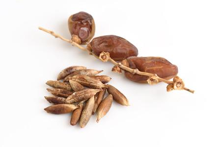 dactylifera: Seeds and Date Palm (Phoenix dactylifera). Stock Photo