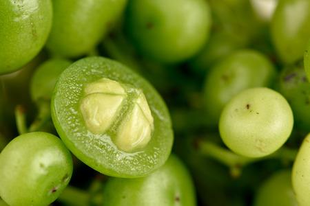 trifolia: Three Leaf Cayratia Stock Photo
