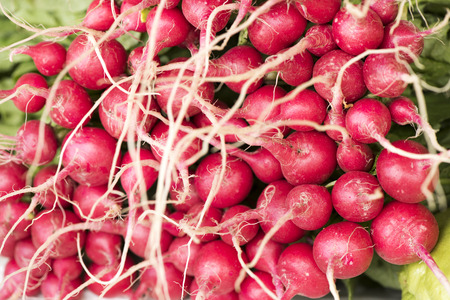 radish: Radish. Stock Photo
