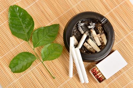 """riek: Stoppen met zichzelf te schaden door te stoppen met roken, Clausena Heptaphylla, Prong Fah Thaise naam Murraya siamensis Craib. Gebruikt als een kruid voor """"stopzetting sigaret"""". Stockfoto"""