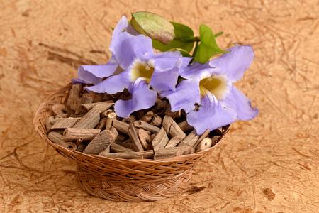neutralizować: Vine Blue Thunbergia Laurel Clock Vine Thunbergia laurifolia Linn., Flowers, Thailand medicinal properties of the drug.