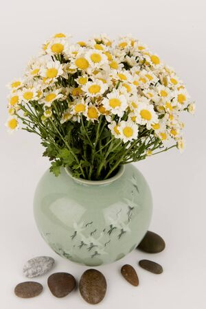 Daisy,flowers in a vase on a white background. Фото со стока