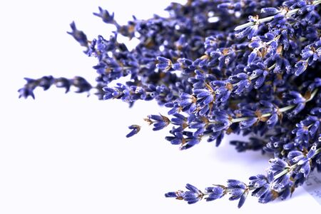 Dried lavender flowers on a white background.