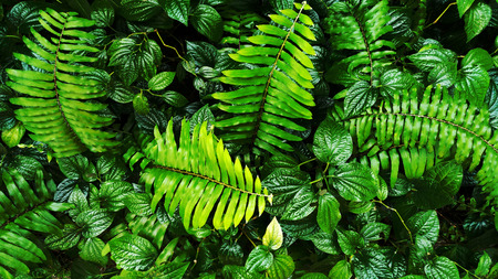 tropical green leaf forest background
