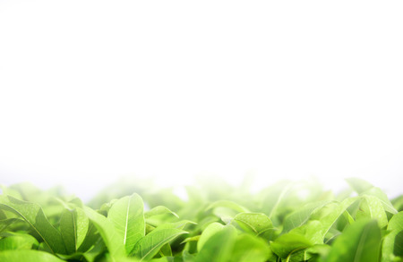 wall textures: blurred green leaf background Stock Photo