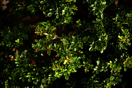 wall textures: vertical garden with tropical green leaf, contrast Stock Photo