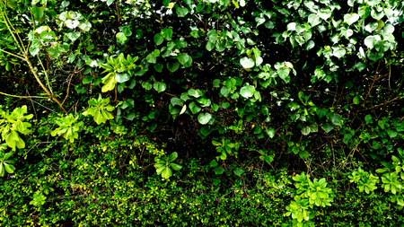 vertical garden with tropical green leaf, contrast Stock Photo