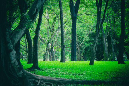 green tree in nature park.