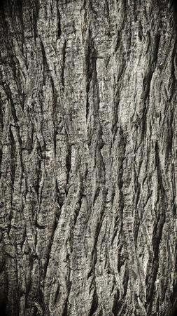 old tree bark texture background Stock Photo