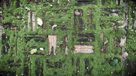 Texture of old brick with green moss Stock Photo