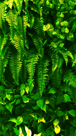 textured wall: Vertical garden with tropical green leaf, contrast