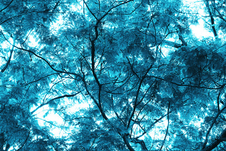 Blue tropical leaf forest background. High contrast.