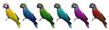 Group of colorful macaws bird isolated on white background