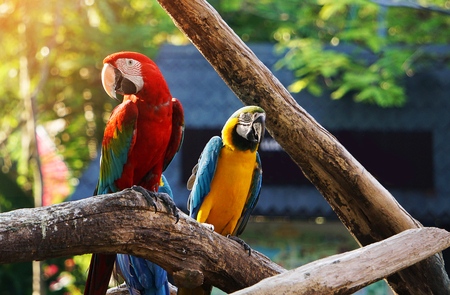Colorful macaw bird on tree branch. Stock Photo